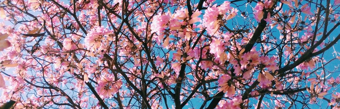 花 折り紙 桃の花 折り紙 : ... 花、フラッグガーランドなどの